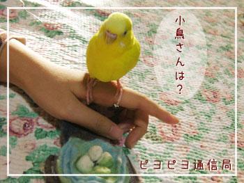 小鳥さんは?